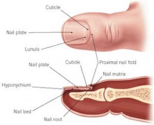 toenail picture