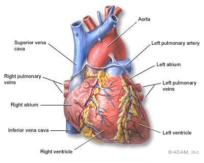 Heart Palpitations – Causes, Symptoms, Diagnosis and Treatment