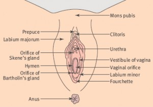 Absess in a gland of the vagina