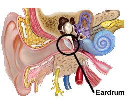eardrum pictures