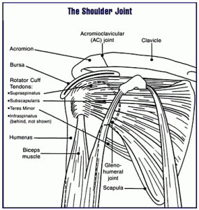 Shoulder Joint Pictures