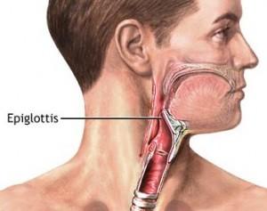 Epiglottis images