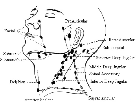 Submental Lymph Node