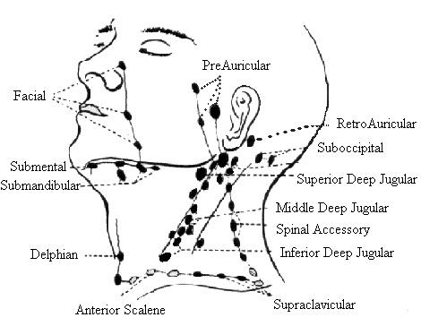 Submental lymph node picture 1 submental lymph node source drbentownsendleswordpress ccuart Images