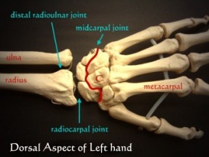 Photos of Radiocarpal Joint