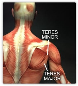 Teres Major Picture