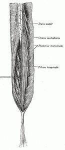 Conus Medullaris Pictures