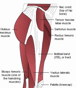 Pictures of Gluteus Maximus
