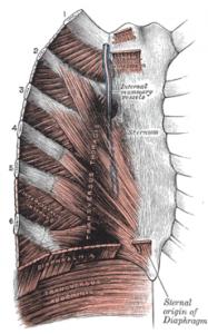 Image of Costochondritis