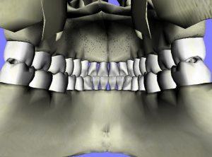 Are Teeth Bones - Teeth illustration